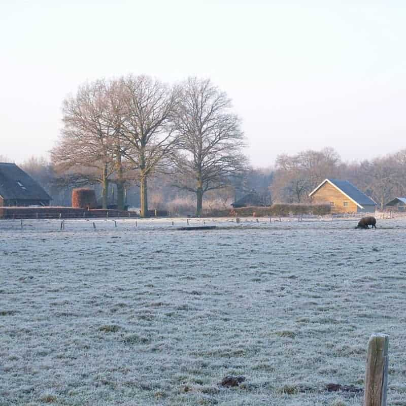 boerderijen-in-winterlandschap